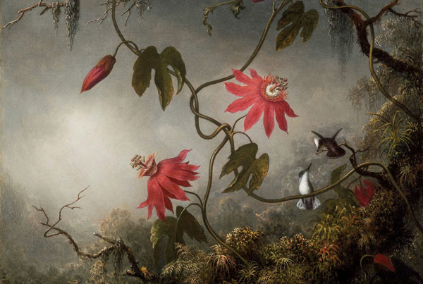 Martin Johnson Heade - Passion Flowers and Hummingbirds (Quelle: Wikimedia Commons)