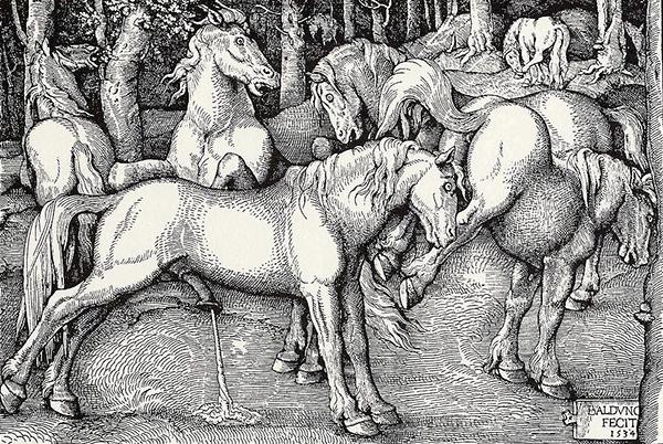 Hans Baldung Grien - Horses (Quelle: Wikimedia Commons)